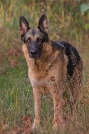 Texas Dog Bite Injury Law |