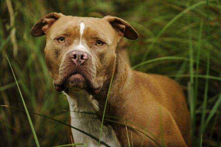 Texas Dog Bite Injury Law  